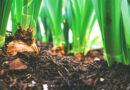 Zo maak je in een paar stappen je eigen compost