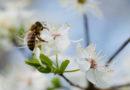 Gerecyclede plastic bijenkorf is ontworpen voor vrolijke bijen.