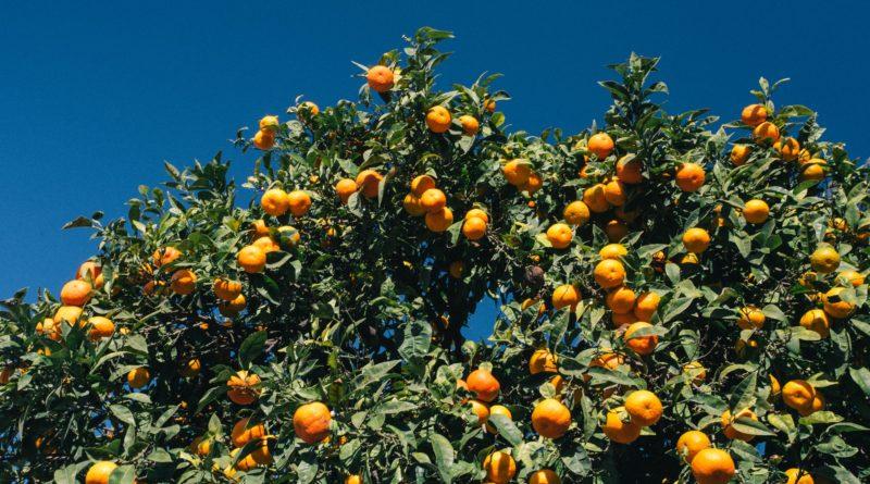 Microplastics in groenten en fruit